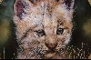 "**1992 ""Lynx Cub"" Artist Q. Lemonds"