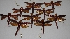 "MBA #3535-882   ""Set Of 9 Brown & Copper Colored Plastic Dragonfly Ornaments"""
