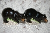 Natures Window Black Bear Salt & Pepper Shakers